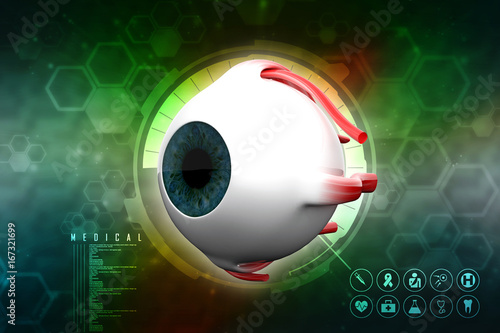 3d Rendering Human Eye Structure Stock Photo And Royalty Free