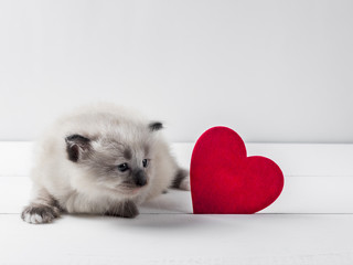 kitten with red heart