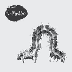 Detailed realistic sketch of caterpillar isolated on white background. Hand drawn insect elements vector illustration.
