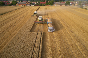 Aerial view of combine harvesters gathers the wheat at sunset, pouring grain into trailer. Harvesting grain field, crop season. Vertical view on harvesters and truck against village in background.