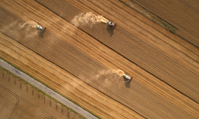 Aerial view on three combine harvesters gathers the wheat at sunset. Harvesting grain field, crop season. Vertical view on harvester in the partly harvested field, diagonal composition.Summer, Europe.