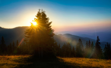 Sun shining through the branches of a pine trees with a misty mountains on a background