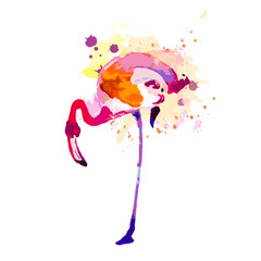 Beautiful watercolor flamingos, isolaned on a white
