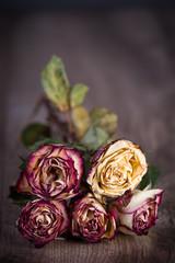 Welke, getrocknete Rosen