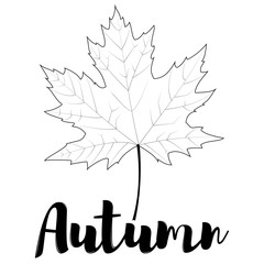 Autumn. Outline maple leaf isolated on a white background. Vector illustration