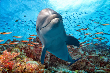 Keuken foto achterwand Dolfijn dolphin underwater on reef close up look