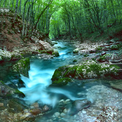 Forest mountain stream, green trees, moss on rocks