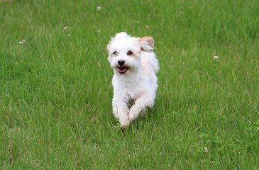 Hund macht Party im Garten