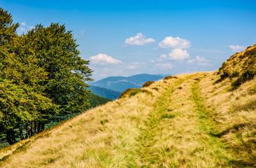 path through beech forest on a grassy hillside