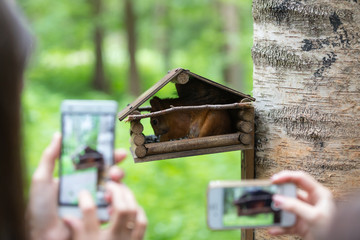 People look at the squirrel in the bird feeder and take photos on their smartphones