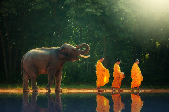 Elephant walking behind monks, Thailand