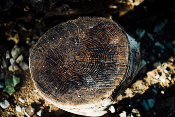 Overhead view of tree stump