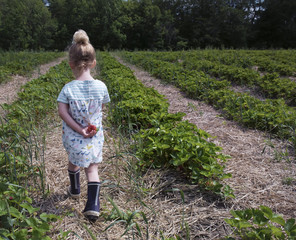 Rear view of girl walking on farm while holding back strawberry
