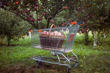 Shopping cart in the garden
