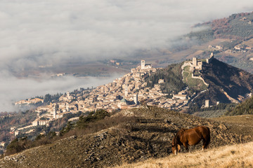 A view of Assisi town and St.Francis church over a sea of fog and a horse pasturing in the foreground.