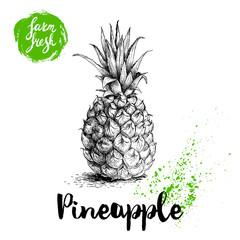 Hand drawn sketch style pineapple poster. Vector pineapple eco food illustration. Hand drawn farm fresh badge.