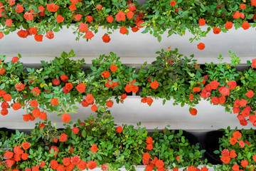 The red flowers in the garden