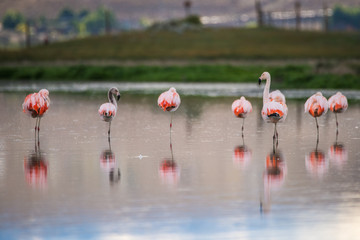 Birds are reflected on the surface of the water. Shevelev.