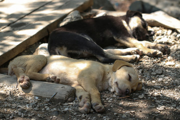 Young dogs are sleeping in the nature.