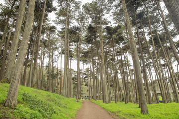 San Francisco Presidio Hike