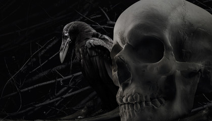 Photo of a black and white black crow sitting with human skull close up composition with branch background pattern.
