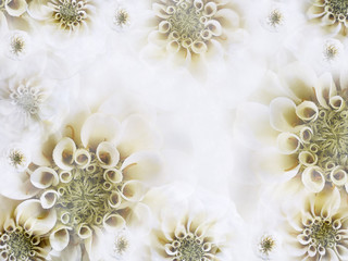 Floral white-yellow beautiful background. Wallpapers of  light white  flowers. Flower composition. Nature.  ...