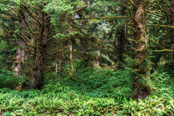 Part of a green rain forest in west coast
