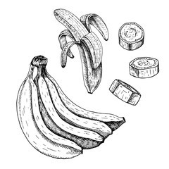 Hand drawn set of banana. Vector sketch