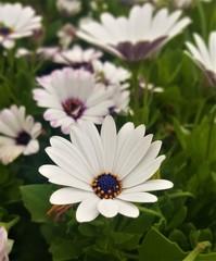 Natural flower