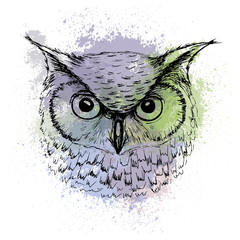 Vector sketch of owl head on a background of colored watercolor stains
