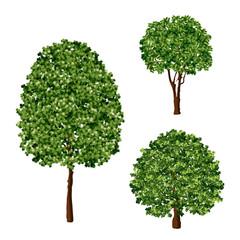 Realistic green trees foliage design element vector set