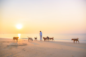 A young woman relaxing and playing with dogs at the beach with beautiful sunrise background. Image of girl and dogs haveing fun together at seaside with copy space. Friendship concept.