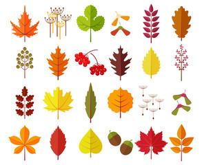 autumn leaves set, isolated on white background. simple cartoon flat style, vector illustration.