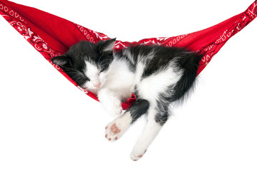 Little kitten sleeps on a hammock. Small cat sleeps sweetly as a small bed. Sleeping cat on a white background. Cats rest after eating.