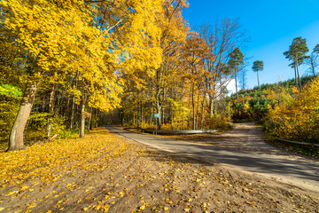 Cross roads in the forest, autumn landscape with golden leaves in sunny day