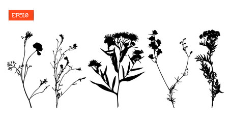 Set silhouettes of wild flowers vector illustration