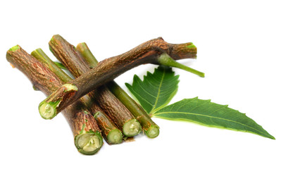 Herbal neem leaves and branch