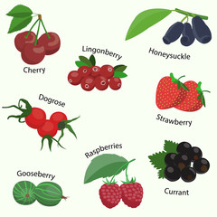 Vector set of berries. Design elements in flat style and icons