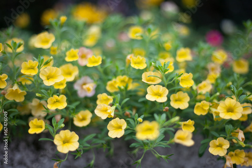 Small Yellow Flowers Stock Photo And Royalty Free Images On Fotolia