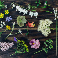 Various wild flowers