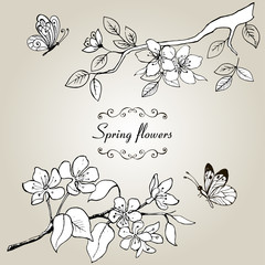 Set drawing by hands of spring flowers. A branch of blossoming cherry, pear and butterfly