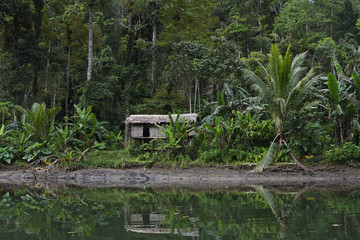 """Steaming rainforest in Misool, Gam river, Raja Ampat, Western Papua, Indonesian controlled New Guinea, on the Science et Images """"Expedition Papua, in the footsteps of Wallace"""", by Iris Foundation"""