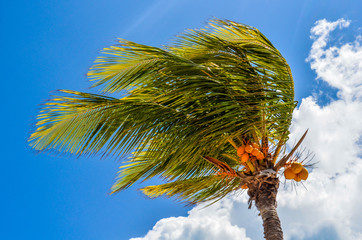 Palme im Wind