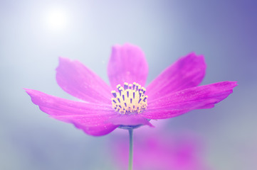 A bright light and a delicate purple flower.