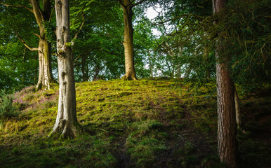 Woodland in Cumbria
