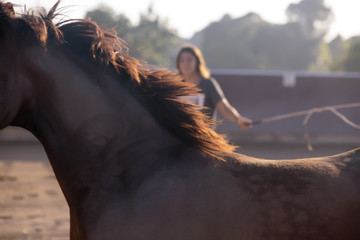 Close-up of horse with woman in background
