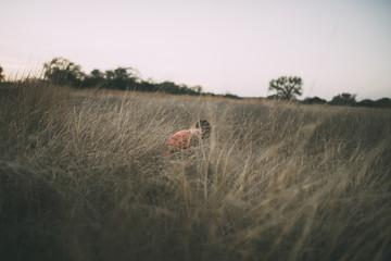 Boy sitting amidst dried grass field
