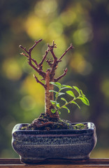 Dry bonsai tree trunk in a pot with fresh green sprigs over blurred natural background. Nature revival power. Resilience concept. Life triumph.
