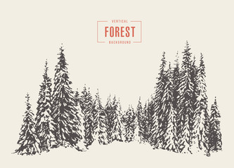 Pine forest vector illustration hand drawn, sketch