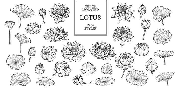 Set of isolated lotus in 32 style. Hand drawn style. Vector illustration